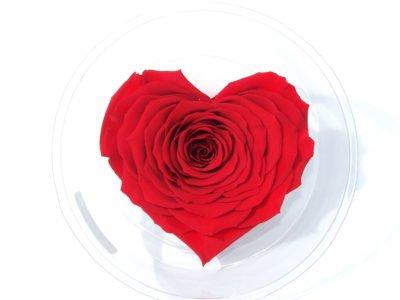 Rose eternelle rouge tige - Les Fleurs du Vermois